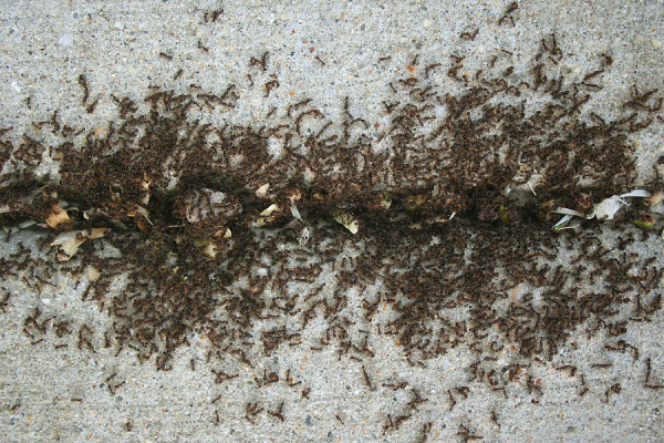 Residential Amp Commercial Ant Exterminators In Se Wisconsin