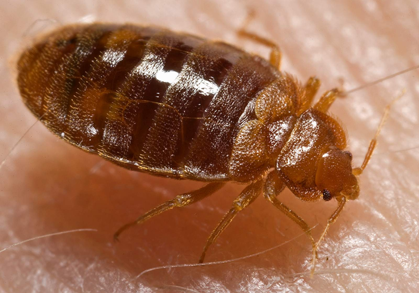 Bed Bug Extermination Milwaukee