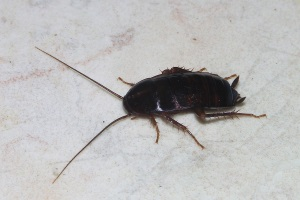 Contact Ehler's Pest Management for pest control services in South Milwaukee