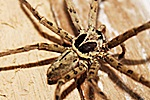 House Spider Invasion Milwaukee exterminator Services