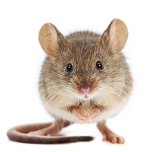 Mice exterminator serving Milwaukee, Racine and Kenosha.