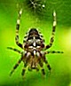 Spider Infestation Shorewood WI Pest Control