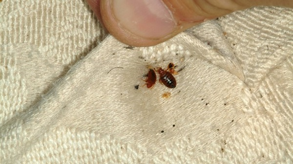 Affordable bed bug heat treatment exterminators in Milwaukee