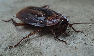 Cockroach Extermination Milwaukee