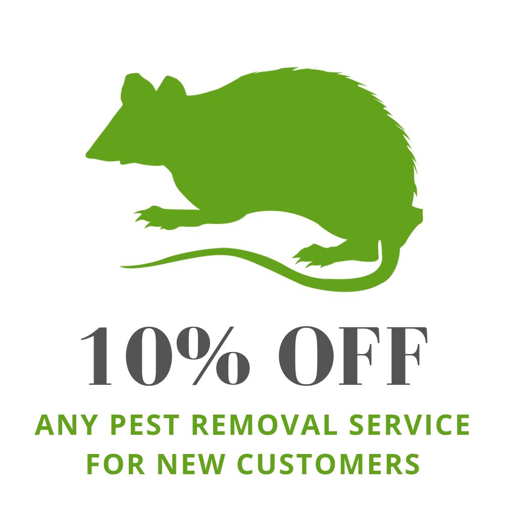 Rodent Exterminator Milwaukee | Mice Removal Service Racine